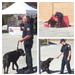 Collage of Personnel with Fire and Rescue Dog
