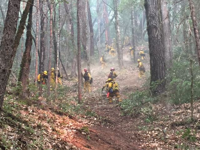 Firefighters working in the woods