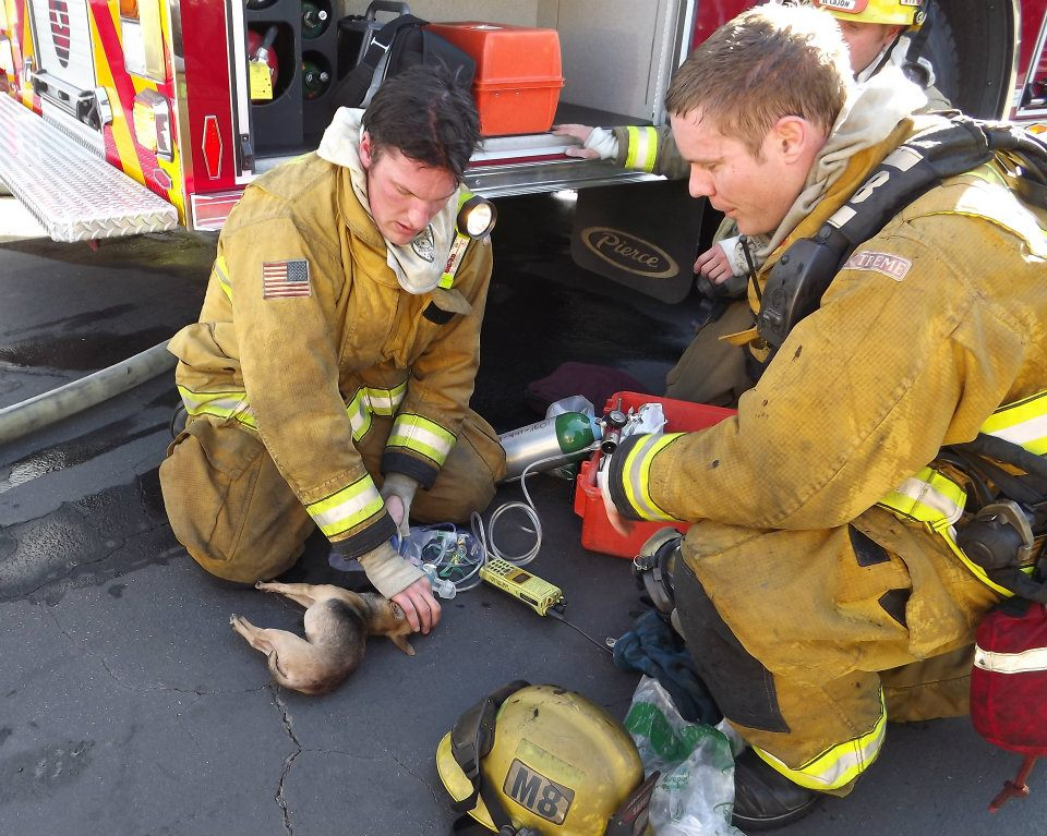 Two firefighters giving aid to small dog