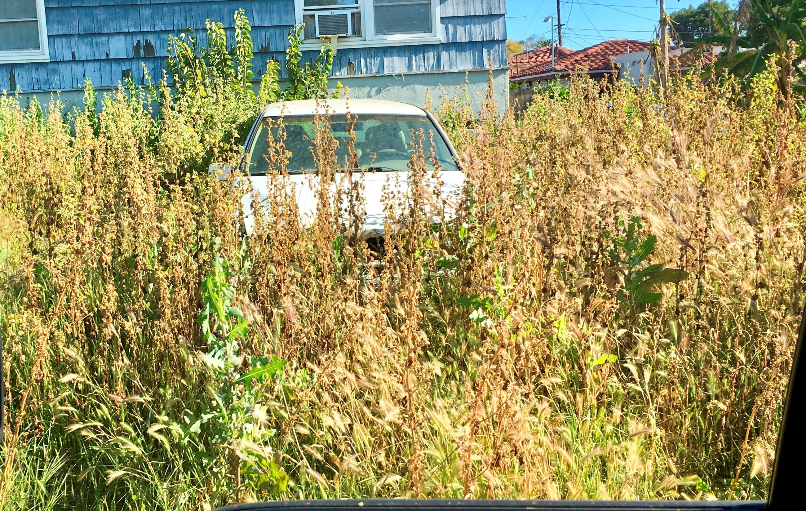 Weeds on residential lot surrounding parked car